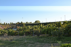 Imagen de Palmeral Resort