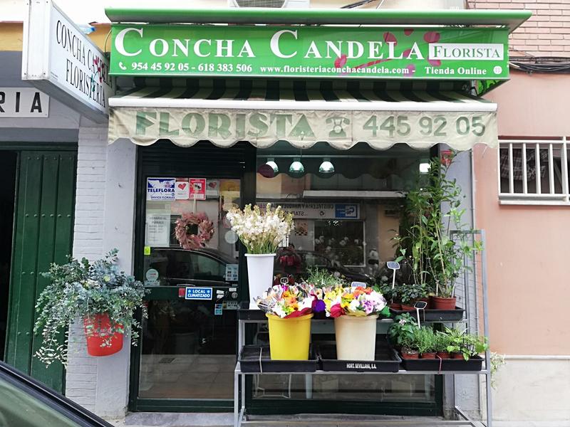 Floristería Concha Candela Sevilla
