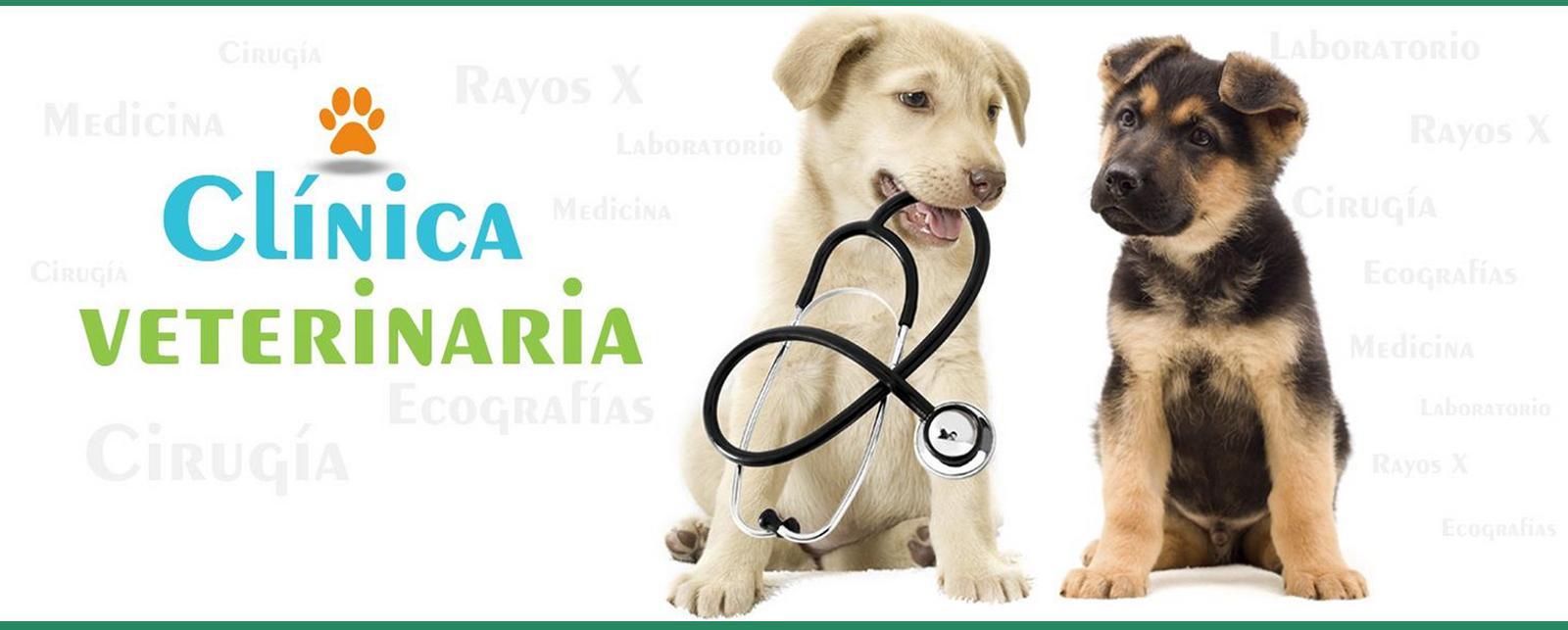 Imagen de Clínica Veterinaria Añó