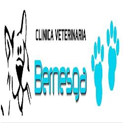 Clinica Veterinaria Bernesga