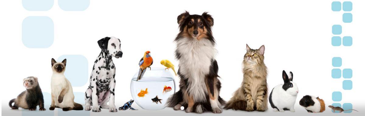 Imagen de Mix Mascotas