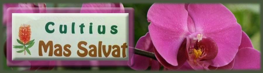 Cultius Mas Salvat