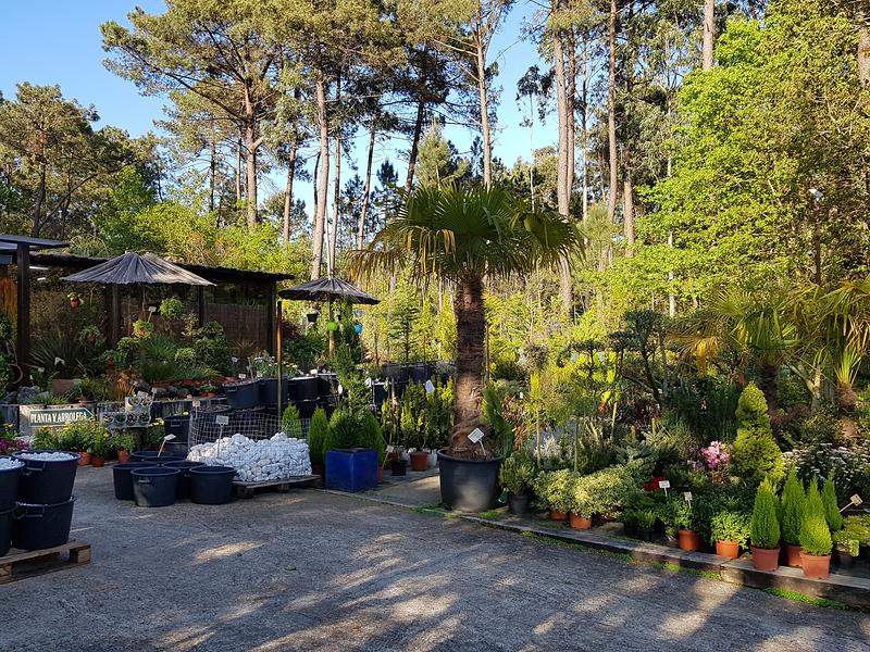 jardines y viveros crespo vigo avenida aeropuerto bajo On viveros de plantas en vigo