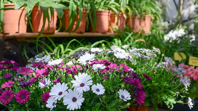 Flower Power Jardines 2