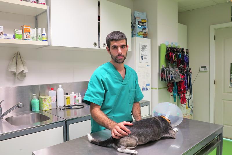 Centre Veterinari De La Plana 15