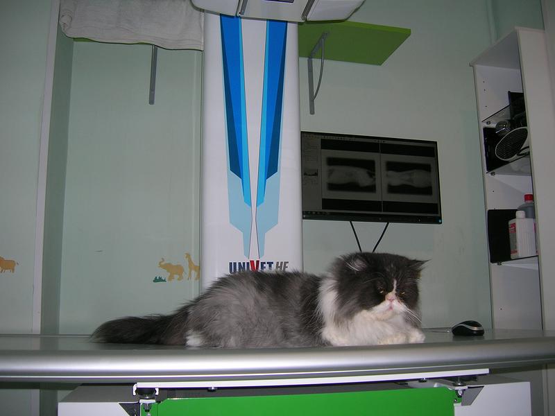 Centre Veterinari De La Plana 34