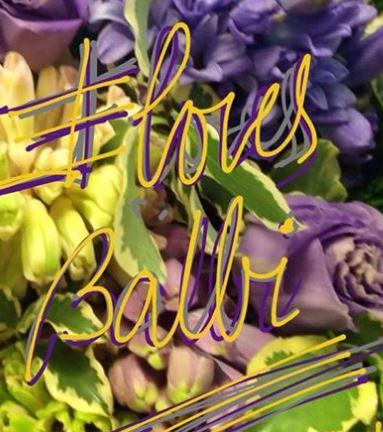 Flores Balbi