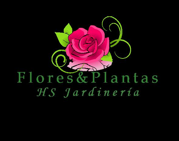 Floristería Flores & Plantas Zaragoza