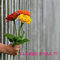 Floristeria Flores Para Ti