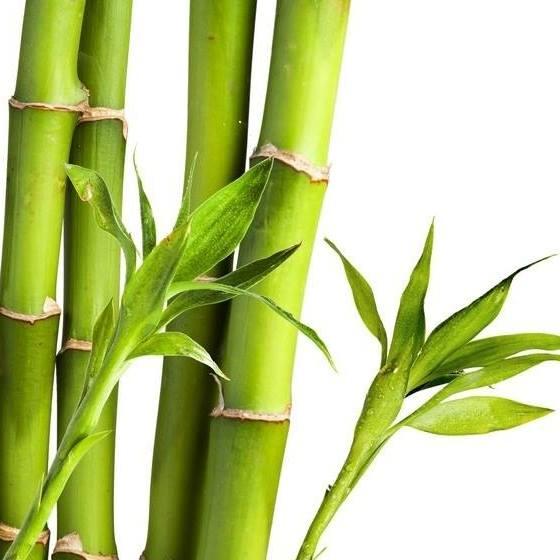 Bambú Floristería