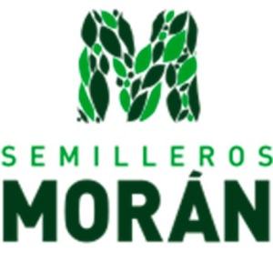 SEMILLEROS MORÁN