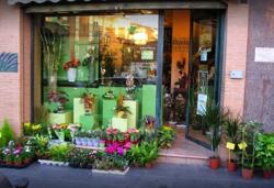Imagen de Floristería Mayoral